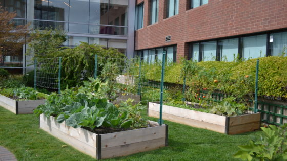 Learn To Grow! With Green City Growers